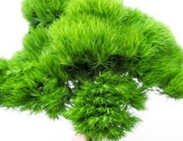 Green Trick