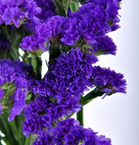 Statice - Sinuata Purple