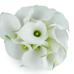 Calla Lilly Mini - Aspen