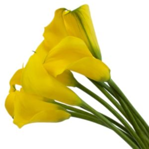 Calla Lilly Mini - Golden Yellow
