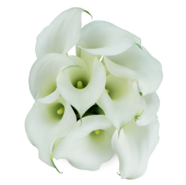 Calla Lilly Mini - White Chrystal