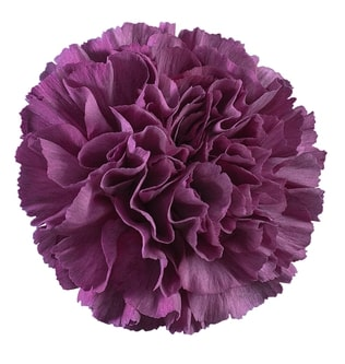 Carnation - Thrill Cobalt